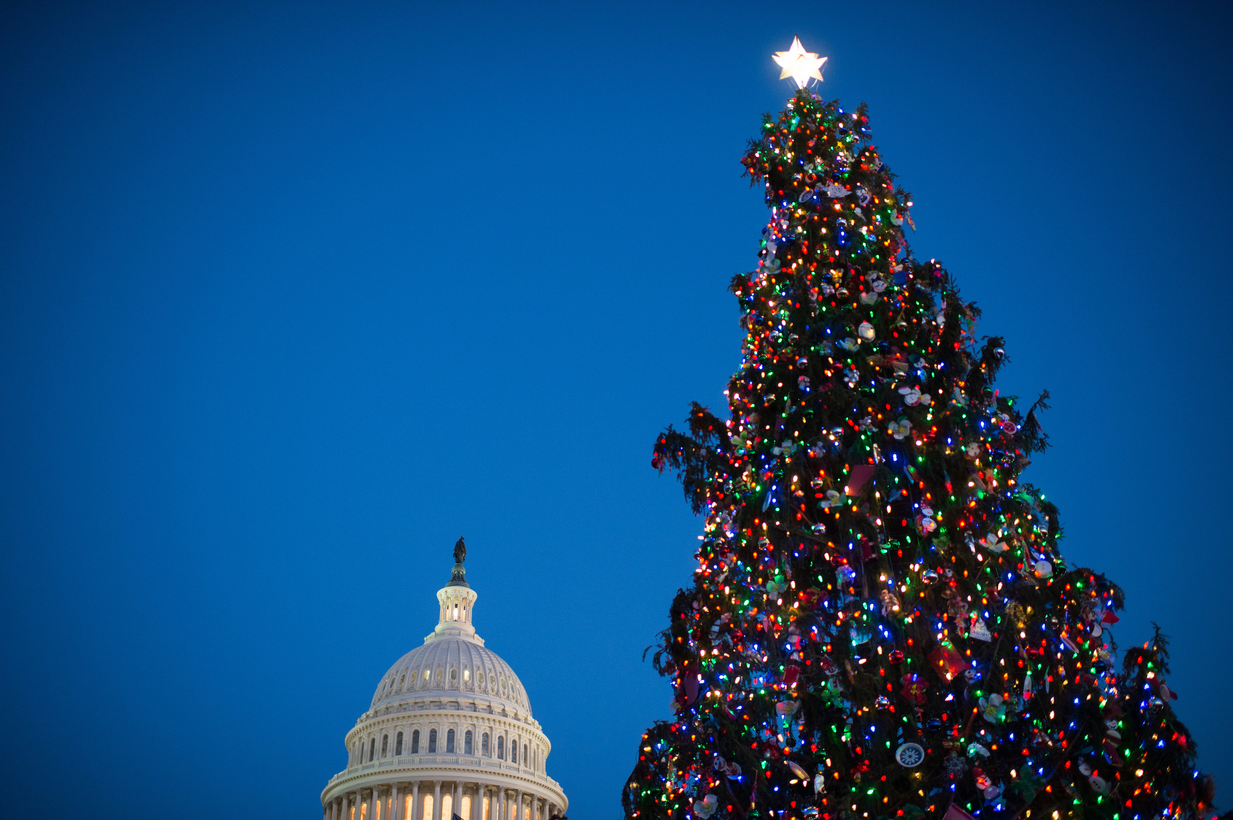 The U.S. Capitol Christmas Tree. (Bill Clark/CQ Roll Call)
