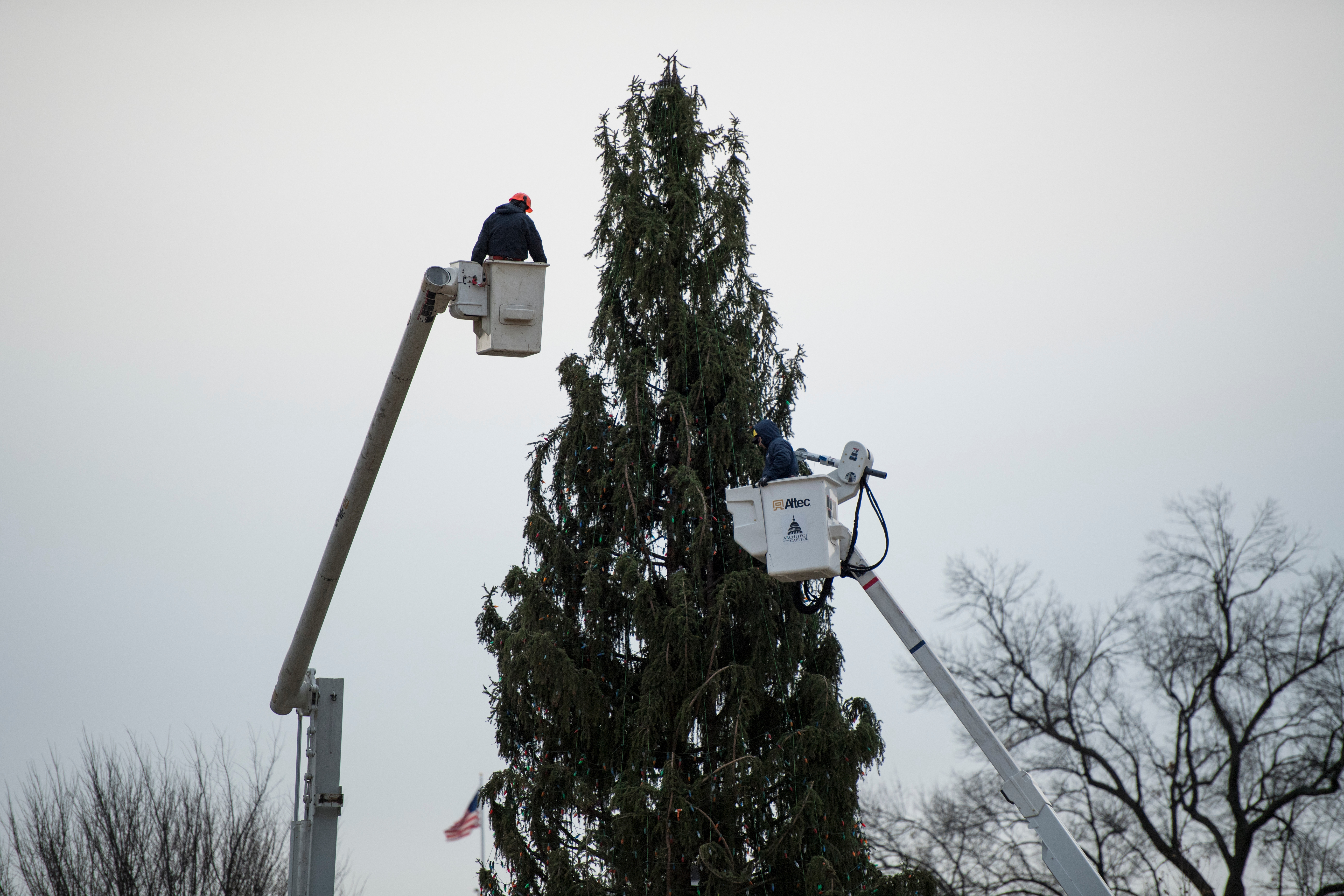 An Architect of the Capitol crew dismantles the Capitol Christmas Tree on the west side of the U.S. Capitol on Thursday. (Bill Clark/CQ Roll Call)