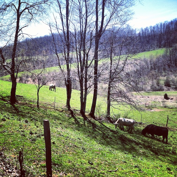 West Virginia farmland