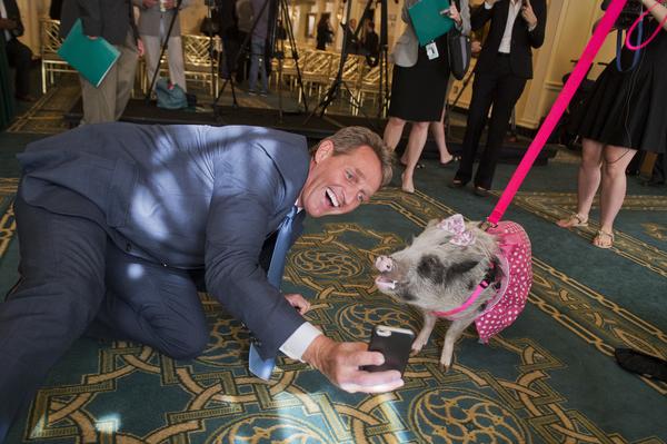 jeff flake pig