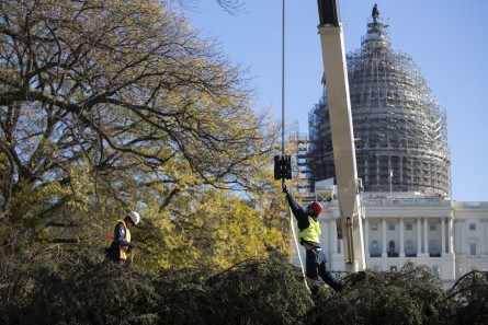 UNITED STATES - NOVEMBER 20 - Workers from the Architect of the Capitol prepare to unload the U.S. Capitol Christmas Tree on the West Front of the Capitol in Washington, Friday, November 20, 2015. The 74-foot Lutz Spruce tree is from the Chugach National Forest in Alaska. (Photo By Al Drago/CQ Roll Call)