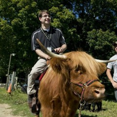 Clemy is a Scottish Highlander cow at the Miles Smith Farm in Loudon. (Bill Clark/CQ Roll Call File Photo)